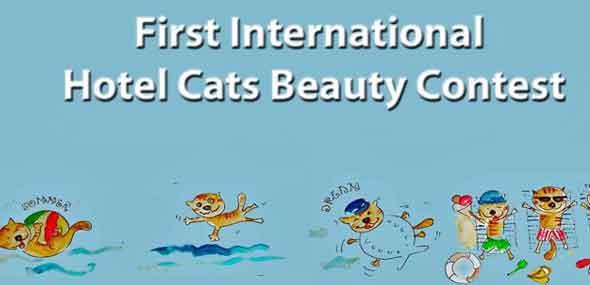 Schönheitswettbewerb für Hotelkatzen