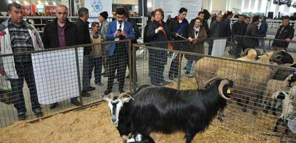 Türkei Messe Agroexpo Izmir