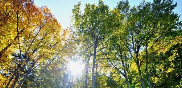 Herbstwandern