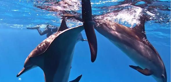 Rückkehr der Delfine Istanbul
